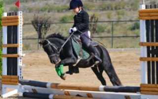 Чем полезен конный спорт детей. Польза верховой езды для женщины. Полезная информация о детском конном спорте