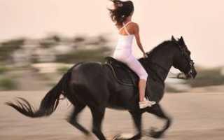 Чем полезна верховая езда для женщин. Верховая езда: польза и вред для здоровья. Возможно вам также понравится