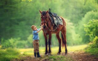 Новогодние стихи для детей про лошадок. Стихи про лошадь