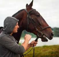 Профессии связанные с коневодством выйти из девятого. Профессия конюх