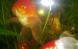 Правда что у рыб память 3 секунды. Память рыбы – три секунды или больше