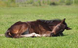 Почему лошади спят стоя а не лежа. Какой сон предпочтителен для лошадей. Почему так происходит