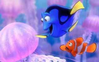 Память какой рыбки 3 секунды. Какая память у рыб