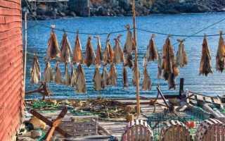 Рецепты вяленой плотвы. Таранка: секреты приготовления сушено-вяленой рыбы в домашних условиях