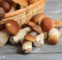 Можно ли есть маринованные грибы при похудении. Суть системы питания заключается в замене всех высококалорийных продуктов на блюда из грибов. Особенно это распространяется на все виды мяса. Низкокалорийная диета с грибами: грибной суп без мяса