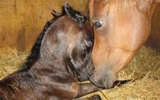 Средний лошадь длина сколько будет. Интересно, сколько лет живут лошади? Факторы, влияющие на долголетие