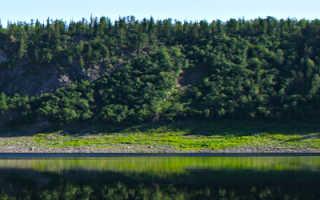 Рыбные места на енисее. Животный мир Красноярска. Рыбы