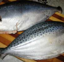 Масляная рыба горячего копчения. Масляная рыба — полезные свойства и калорийность, как приготовить эсколар. Чем полезен палтус. Польза палтуса для здоровья
