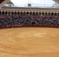Представление с быками в испании. Коррида