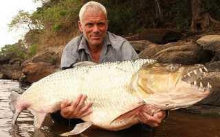 Удивительные речные рыбы (20 фото). Список речной рыбы