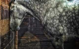 Почему лошадь ложится на землю. Правда ли, что лошади спят стоя? Сон стоя — миф или реальность