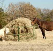 Что лучше сено или солома. Сено, сенаж, силос и солома: все о кормлении лошади