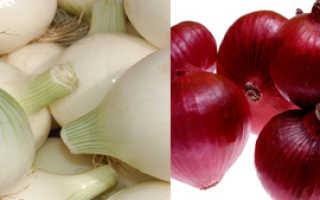 Отличие красного лука от обычного. Белый и красный лук: отличия и полезные свойства