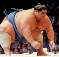Чем живут борцы сумо и почему они такие большие. Сколько весит борец сумо, как набирают вес сумоисты