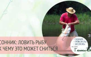 Ловить рыбу в мутной воде означает. Видео о рыбалке весной. Сонник Миллера: ловить рыбу – различные толкования