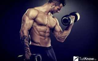 Можно ли набрать мышечную массу после 30 лет. Механизм роста мускульных тканей. Факторы, влияющие на метаболизм