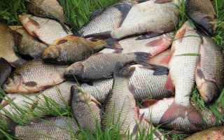 Пожелания хорошего клева. Ритуалы, заговоры и приметы на удачную рыбалку. Заговоры на хороший клев