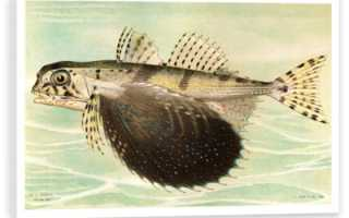 Модульные картины с рыбками. Картины с рыбами