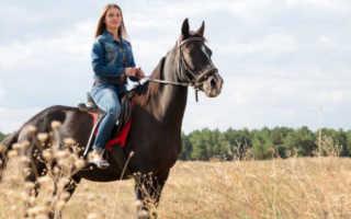 Что значит во сне кататься на коне. Ехать верхом на лошади по соннику: толкование снов, описание подробностей. К чему снится лошадь по Английскому соннику