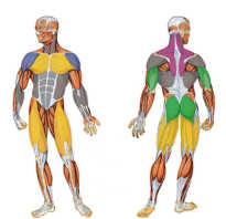 Мышечные блоки. Мышечные зажимы и блоки. Как снять мышечное напряжение