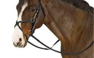 На шее у лошади деревянное с колокольчиком. Средства управления лошадью. Знаете ли вы, что