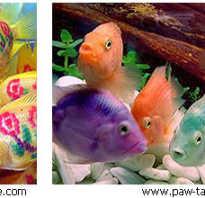Чем красить рыбу. Как красят красную рыбу. Проблемы с окрашенной рыбой