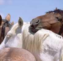 Сон лошади: как спят эти животные, стоя или лежа? Правда ли, что лошади спят стоя