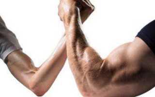 Строение мышц человека схема. Бицепс — двуглавая мышца плеча. Строение бицепса и его функции. Подъем штанги на бицепс стоя