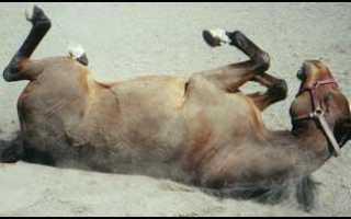 Что значит конь не валялся фразеологизм. «Конь не валялся» — значение и происхождение фразеологизма