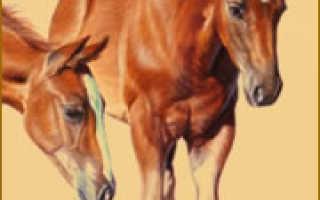 Прилепский конный завод продажа лошадей. Прилепский конный завод