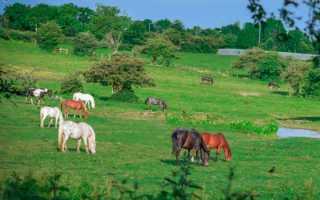 О хорошем отношении к лошадям. Анализ стихотворения «Хорошее отношение к лошадям. Анализ стихотворения «Хорошее отношение к лошадям» Маяковского