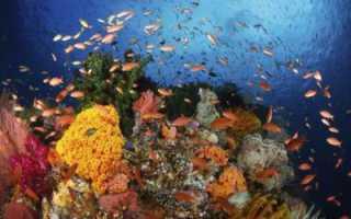 Что изучает наука ихтиология. Ихтиология рыб