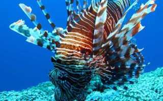 Рыба с носом. Как называется рыба с длинным носом