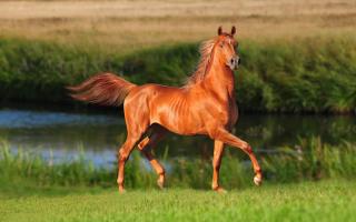 Самые мощные лошади в мире. Самая большая лошадь в мире: интересные факты. Самсон — непобежденный рекордсмен из прошлого