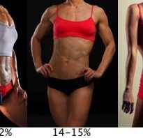 Процент мышц в организме. Красные мышечные волокна. Процент жира в организме: теоретические основы