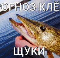 Прогноз клева рыбы г глухов. Прогноз клёва и погоды. Активность хищника меняется со сменой сезона